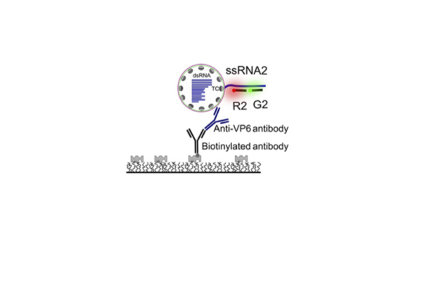 A single-molecule FRET-based strategy to detect specific viral RNAs